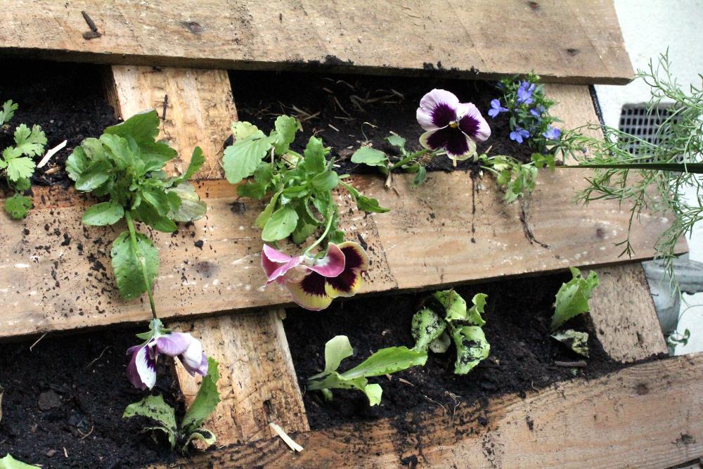 Pallet plants (2)