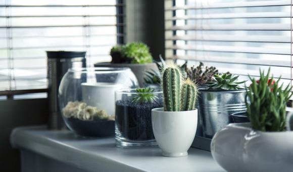 Mantelpiece cactus plant pots metal and glass